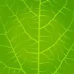Fresh, green tea leaves on a white background vector — Stock Vector