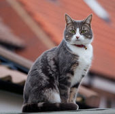 Cat on Roof — Stockfoto