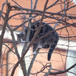 Cat in tree — Stock Photo #8972019