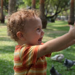Child in the park next to the birds — Stock Photo #9501010