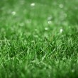 Background of green wet grass — Stock Photo