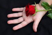 On children's hands is a red rose — Stockfoto