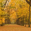 New York City Central Park alley in the Fall. — Stock Photo #10476289