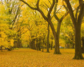 New york city central parku aleja jesienią. — Zdjęcie stockowe