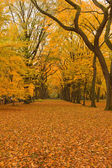 New York City Central Park alley in the Fall. — Stock Photo
