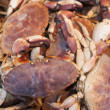 Crabs at the Market. — Stok fotoğraf