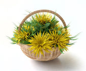 Basket with Yellow Asters — Stock Photo