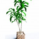 House Plant — Stock Photo #9560223
