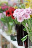 Deliziosi fiori — Foto Stock