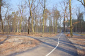Fall in forest - park road in Bucha, Ukraine — Stock Photo