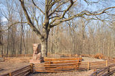 Gros vieux chêne — Photo