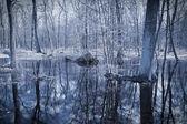 Dark paludal forest. Monochrome photo — Stock Photo
