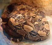 Snakes in the Kyiv Zoo, Ukraine — Foto Stock