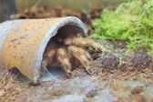 Spider in flowerpot in the Kyiv Zoo, Ukraine — Stock Photo