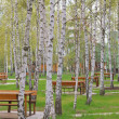 Beautiful picnic area in a suburb of Kyiv, Ukraine — Stock Photo