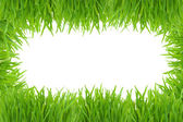 Green grass photo frame isolated on white — Stock Photo