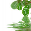 Beautiful leaves reflected in rendered water — Stock Photo