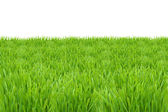 Green grass lawn isolated on white background — Stock Photo
