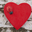 Heart with ladybug on birch tree trunk background — Stock Photo #8508492