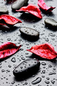 Wet black stones and petal — Stock Photo