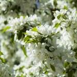 Spring — Stock Photo #10015502