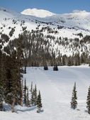 Skiing — Photo