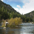 Fly Fisherman — Stock Photo #9607656
