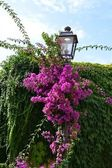 Lamppost flower — Stock Photo