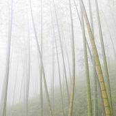 Asian bamboo forest with morning fog weather — Stock Photo