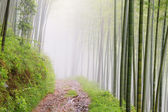 Quiet road road in the bamboo forest in the mountains — Stock Photo