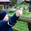 3 years  boy feeding a goat — Stock Photo