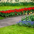 Colorful flowers. garden Keukenhof. — Stock Photo #10547640