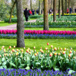 Keukenhof Gardens. amsterdam — Stock Photo #10547655