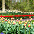 Flowers of Keukenhof. Holland — Stock Photo #10547668