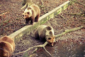 3 Bears — Stock Photo