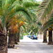 Road and palm trees. Balearic Islands. Majorca - Stock Photo