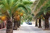 Strada e alberi di palma. Isole Baleari. Maiorca — Foto Stock
