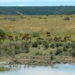 African nature scene — Stock Photo