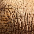 Stock Photo: Elephant skin