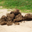 Elephant dung for paper production — Stock Photo