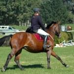 Постер, плакат: Horse riding sport