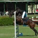 ������, ������: Horse jumping