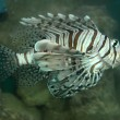 Turkey Fish — Stockfoto #9971727
