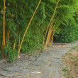 Постер, плакат: Walkway along the growing of bamboo