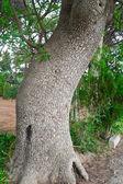 Stammen på trädet — Stockfoto