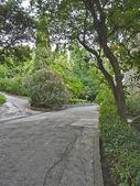 Steegje op het groen van het park — Stockfoto