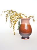 Mimosa flowers in a vase. — Stock Photo
