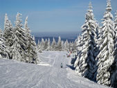 Frosty trees on the ski slope — Stock Photo