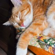 The red cat sleeps on a chair - Lizenzfreies Foto