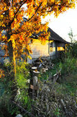 The old house in russian village, against a bright autumn maple — Stock Photo
